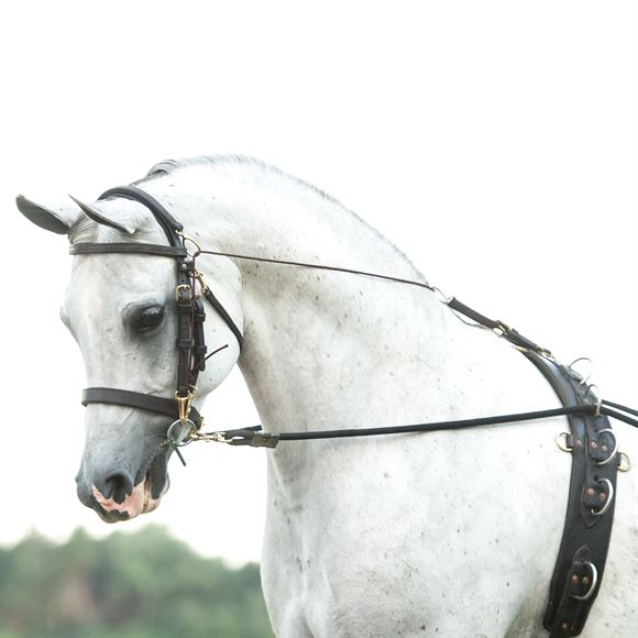 Victor Supreme Gene LaCroix Arabian Side Check Training Bridle
