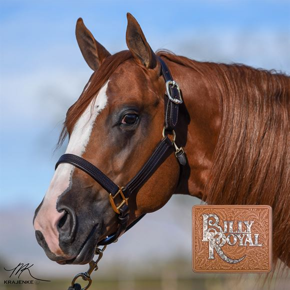 Billy Royal® Delmar Leather Halter with Two-Tone Buckles