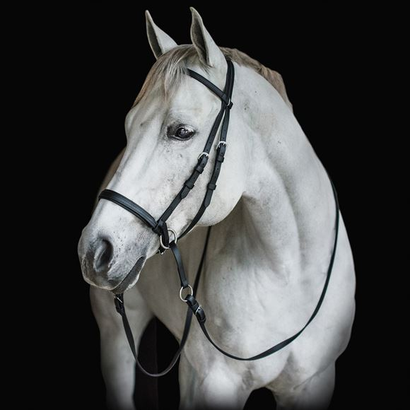 Dr. Cook's Beta Bitless Bridle