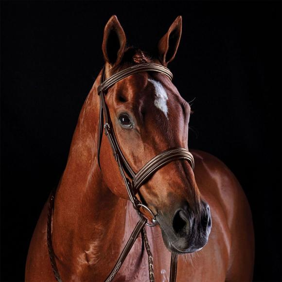 Collegiate Comfort Crown Fancy Stitched Raised Caveson Bridle