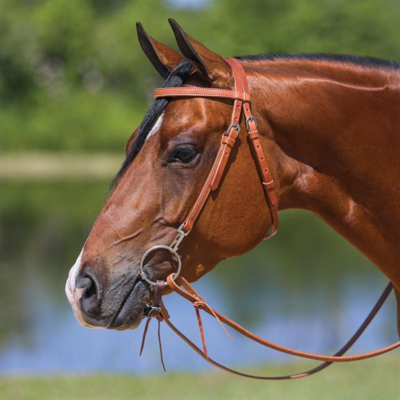 Double S Browband Training Bridle with Snaps
