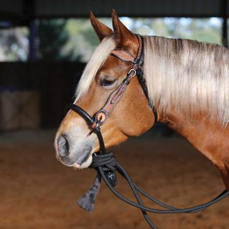 Double S Tooled Browband Bosal Setimage