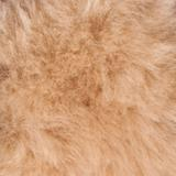 Merino Sheepskin Miracle Collar Cover