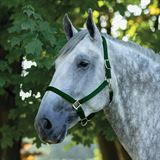 Dura-Tech® Draft Horse Nylon Breakaway Turnout Halter