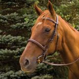 HDR Pro Mono Crown Fancy Stitched Padded Bridle41824_australiannut.jpg image