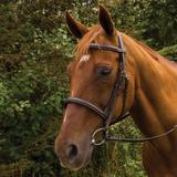 HDR Pro Mono Crown Fancy Stitched Padded Bridle41824_havana.jpg image
