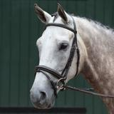 Collegiate® Essential Padded Raised Fancy Stitched Flash Bridle42031_brown.jpg image