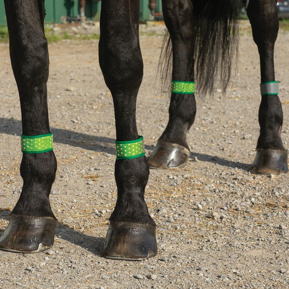 Fly Free Zone Leg Bands