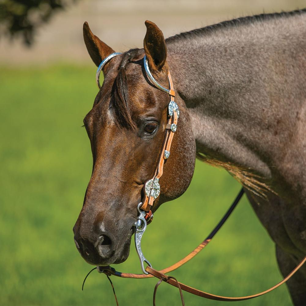 Billy Royal® Brighton Quick Change Two Ear Headstall