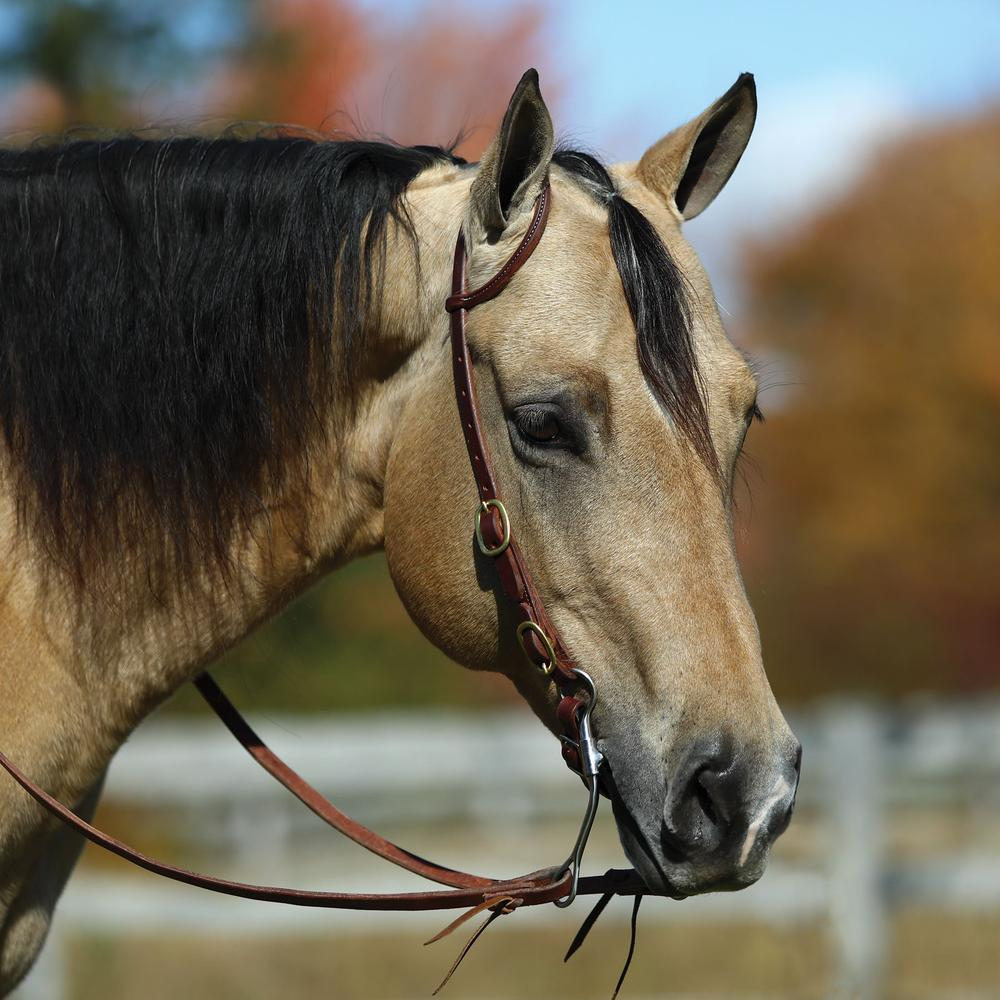 Western Oak™ Rolled One Ear Headstall with Buckle End