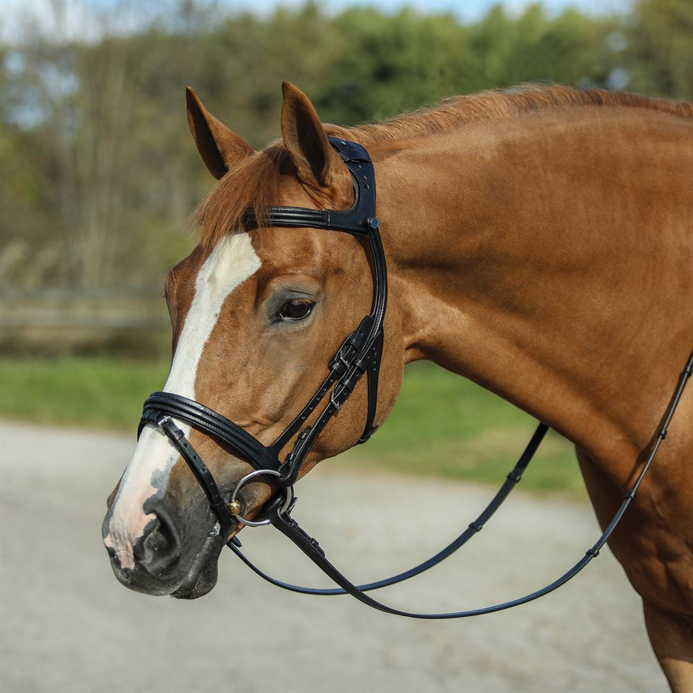 Stubben Freedom English Bridle