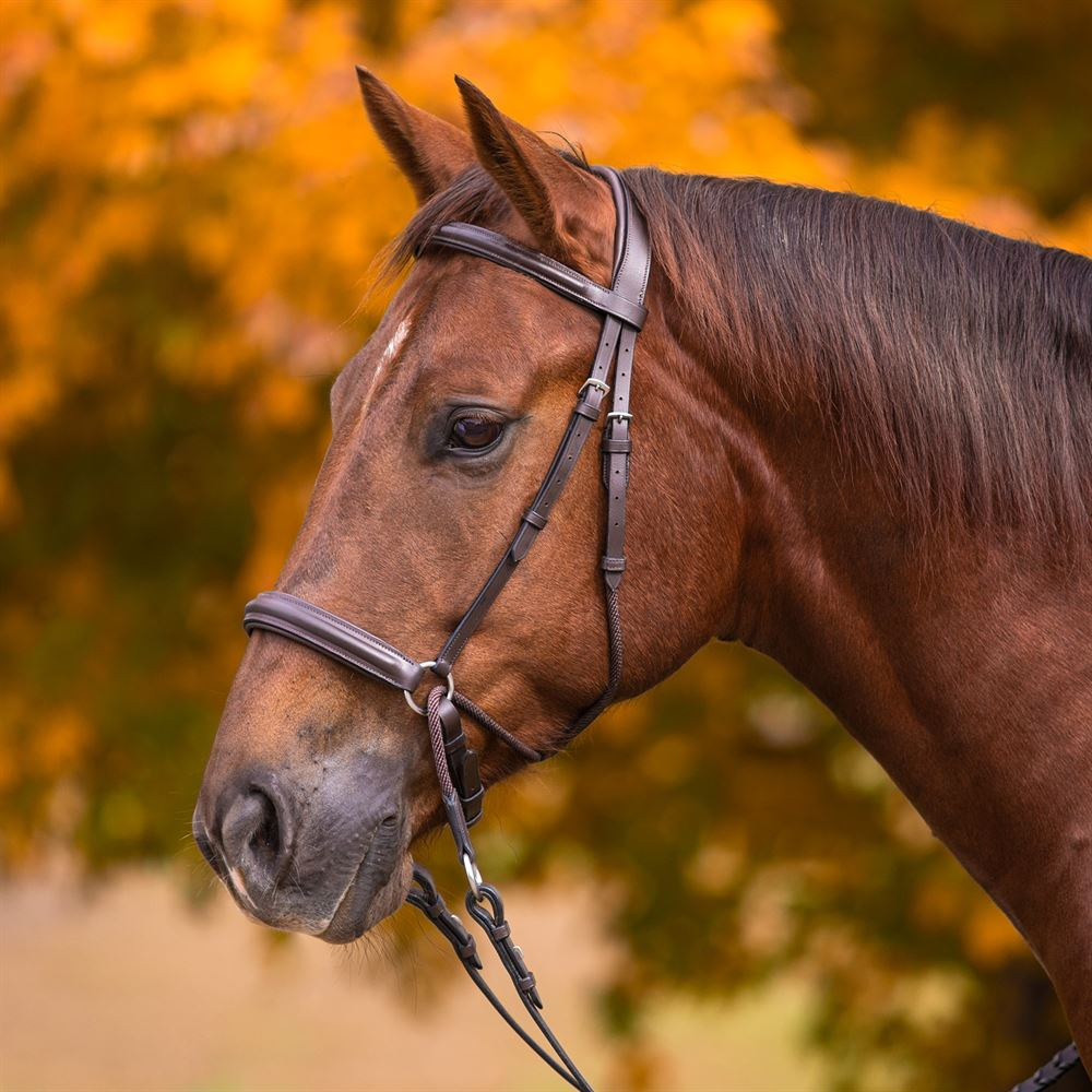 Pinnacle Leather and Rope Bitless Bridle