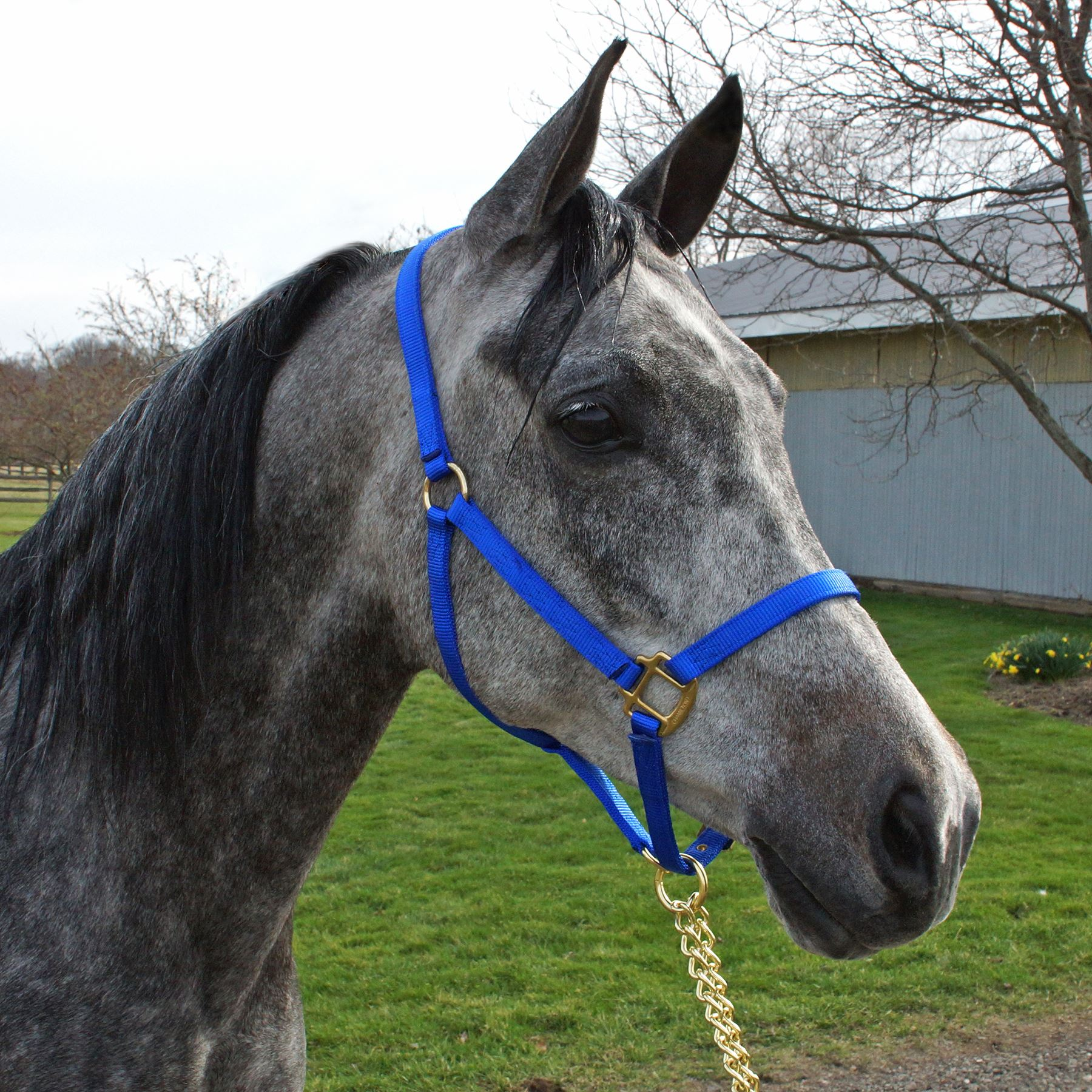 red Hamilton 3//4 Adjustable Quality Pony Halter with snap