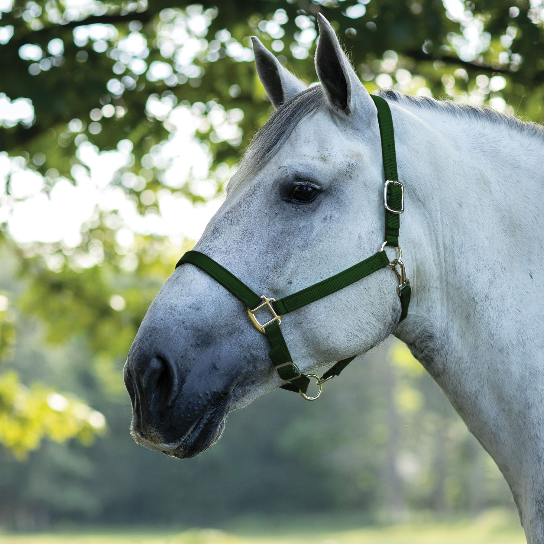 New Horse Tack Lime Green Triple Ply Nylon Horse Size Turnout Halter With Snap Halters